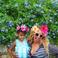 Image 10: Beyonce Blue Ivy Walking Stairs