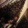 Image 2: Chris Brown Royalty