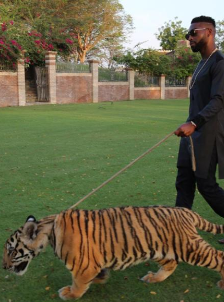 Tinie Tempah with tiger on a lead