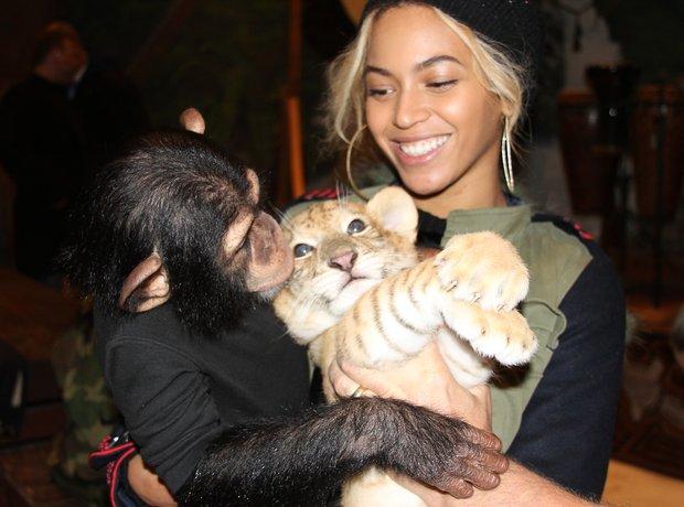 Beyonce monkey tiger