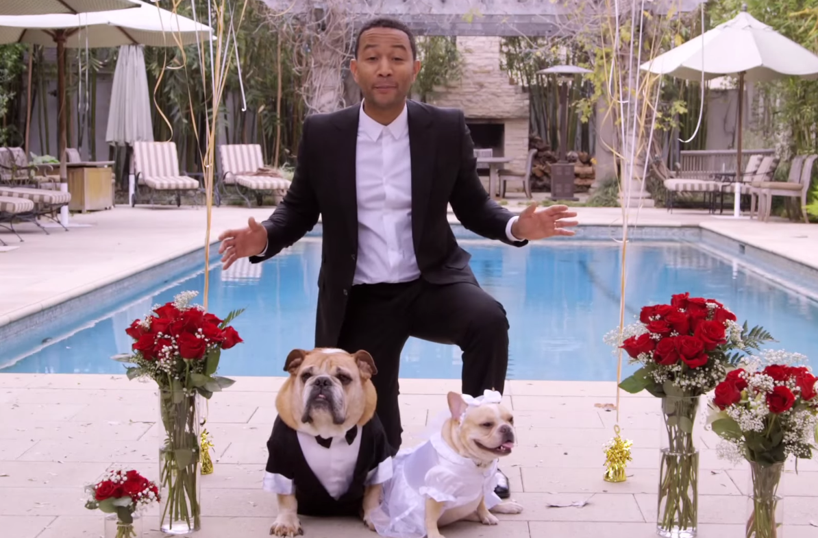 John Legend Dogs Wedding