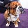 Image 9: Lewis Hamilton Dog