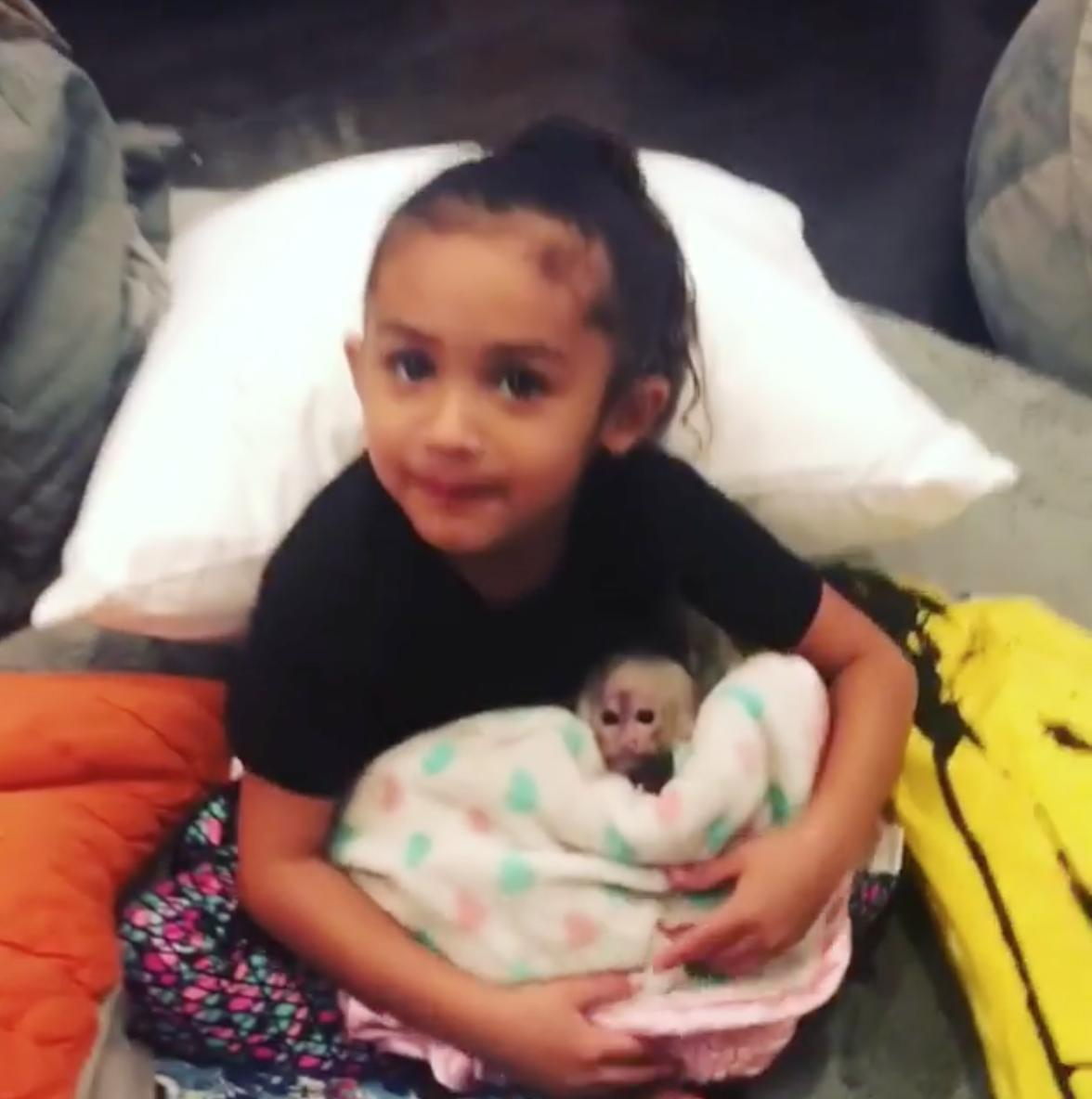 Chris Brown Royalty Monkey